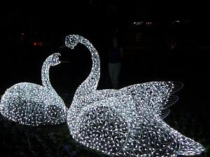 Световые лебеди г.Волгоград